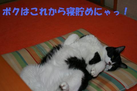 028_convert_20100225201250.jpg