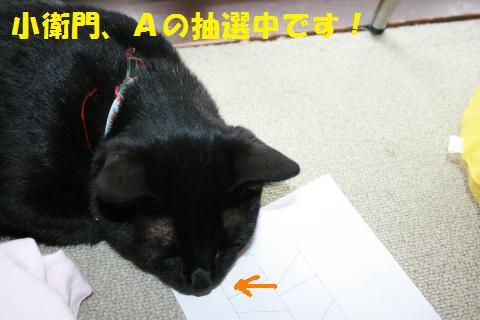 028_convert_20100808204750.jpg