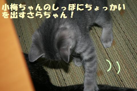 028_convert_20111117194539.jpg