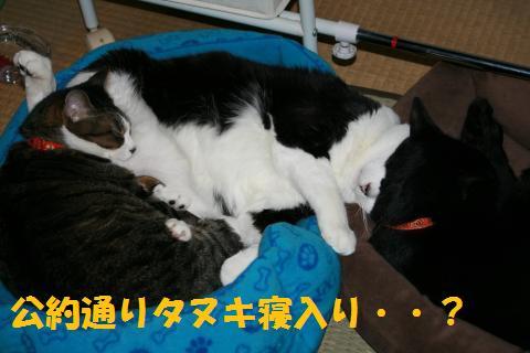 029_convert_20100429000414.jpg