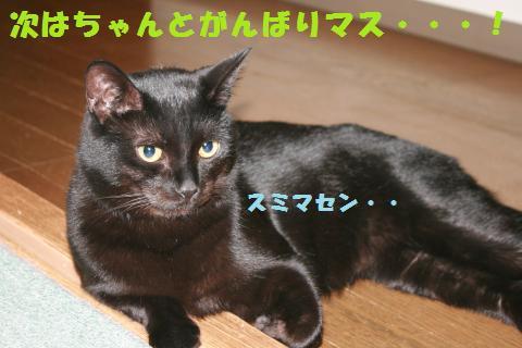 029_convert_20110122193155.jpg