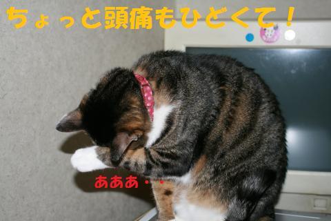 030_convert_20100218234236.jpg