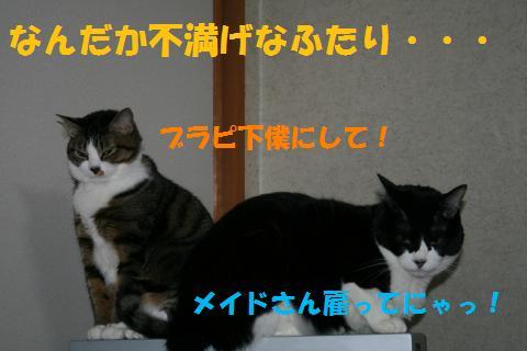 030_convert_20100424215618.jpg
