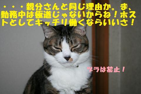 030_convert_20101124194742.jpg