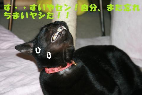 030_convert_20101210222527.jpg
