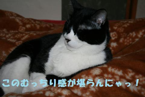030_convert_20110306181948.jpg