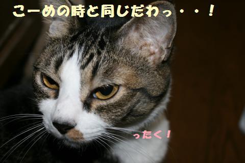 030_convert_20110527231724.jpg