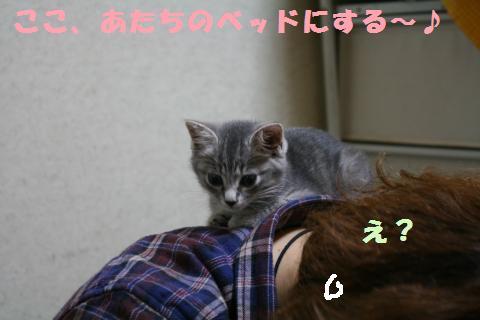 030_convert_20111111235748.jpg