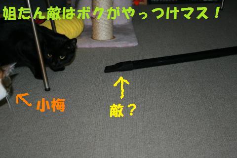 031_convert_20100129222848.jpg