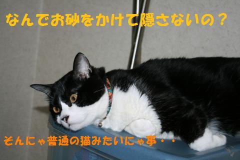 031_convert_20100810162558.jpg