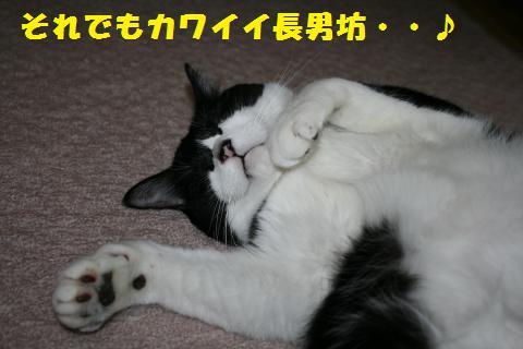 031_convert_20110520230827.jpg