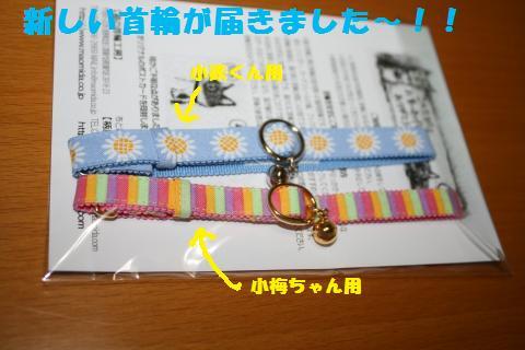 031_convert_20110612223358.jpg