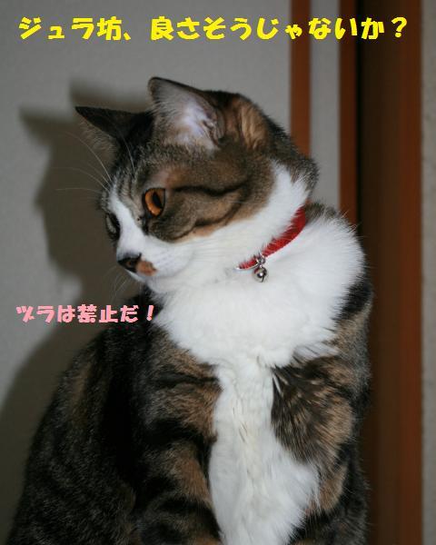 032_convert_20101124194834.jpg