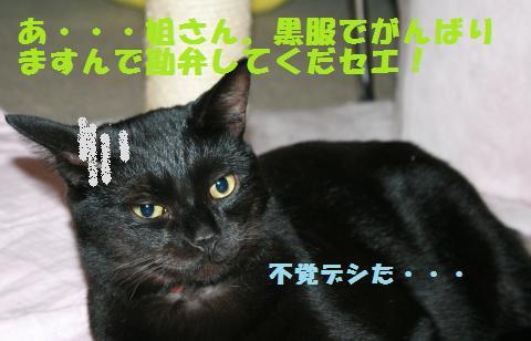 032_convert_20101210222612.jpg