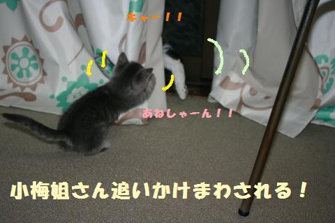 032_convert_20111027183420.jpg