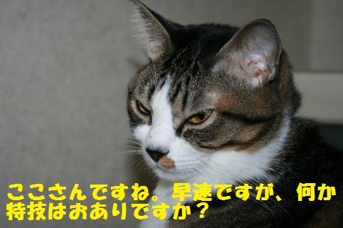 033_convert_20101212164046.jpg