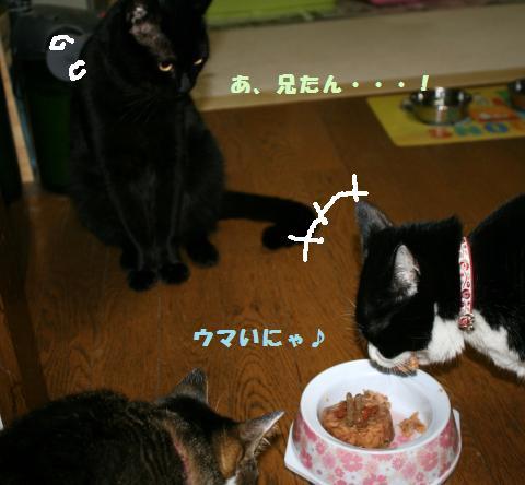 033_convert_20110527231911.jpg