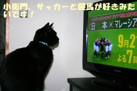 033_convert_20110925203827.jpg