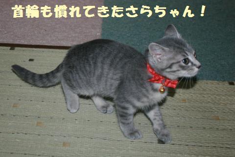 033_convert_20111201204613.jpg
