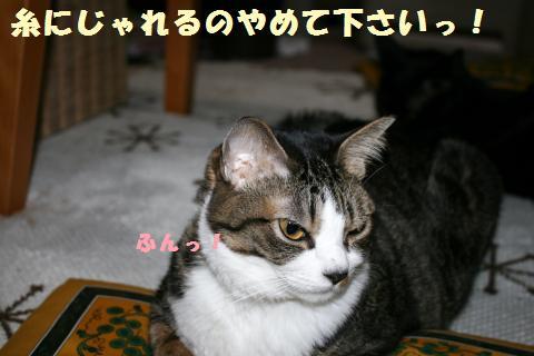033_convert_20120124220130.jpg