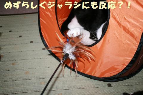 034_convert_20110802180722.jpg