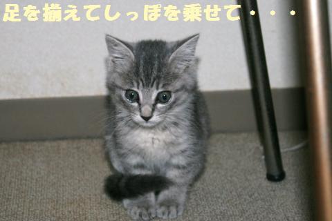 034_convert_20111102234634.jpg
