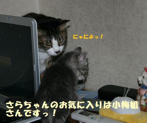 034_convert_20111117194625.jpg