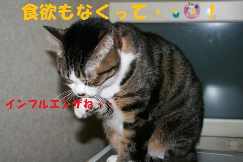035_convert_20100218234413.jpg