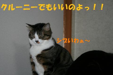 035_convert_20100424215745.jpg