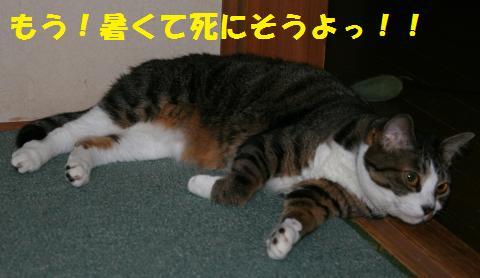 035_convert_20100716231413.jpg