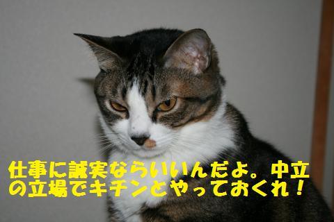 035_convert_20101212164356.jpg