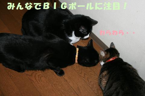 035_convert_20110216194408.jpg