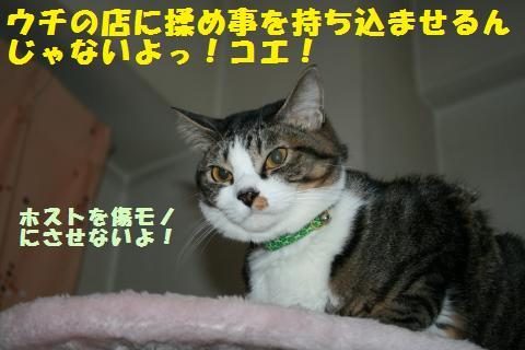 035_convert_20110303203422.jpg
