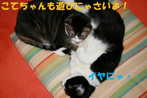 036_convert_20100129223437.jpg