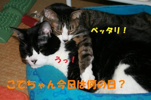 036_convert_20100429000547.jpg