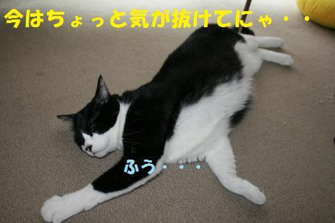 036_convert_20100713002119.jpg