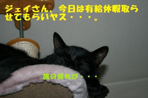 036_convert_20101211225223.jpg