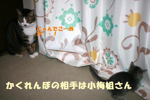 036_convert_20111027183606.jpg