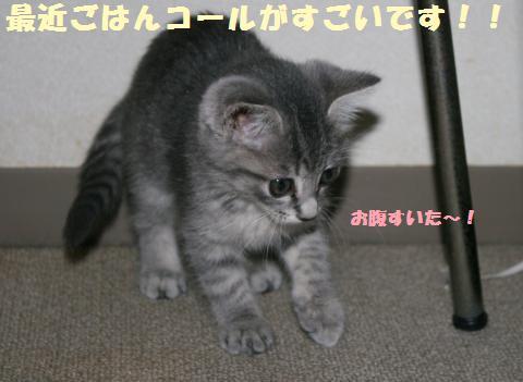036_convert_20111102234709.jpg