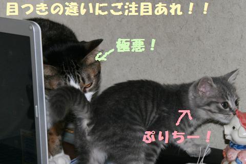 036_convert_20111117194657.jpg