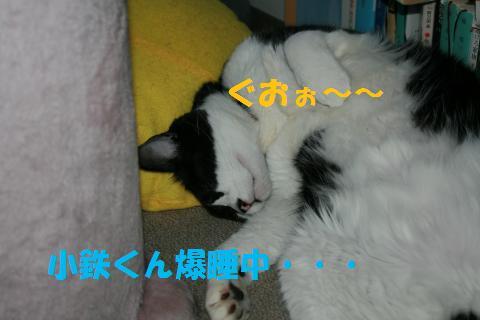037_convert_20100728215147.jpg