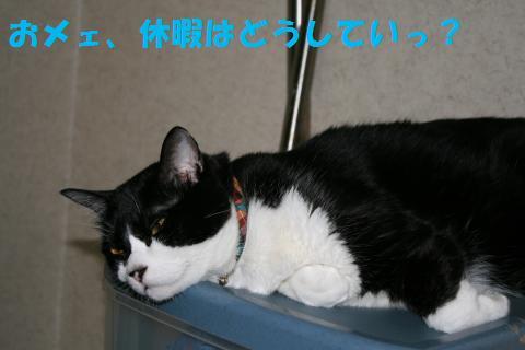 037_convert_20100812190030.jpg
