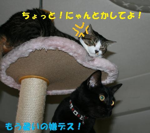 037_convert_20100906232042.jpg