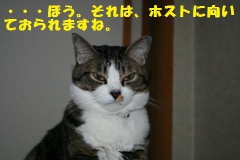 037_convert_20101124194959.jpg