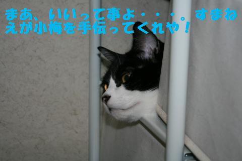 037_convert_20101210222027.jpg