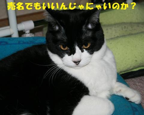 037_convert_20110403222249.jpg