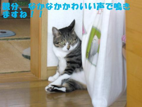 037_convert_20110910165205.jpg