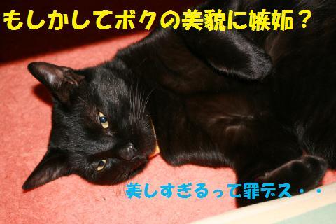 038_convert_20100417235108.jpg