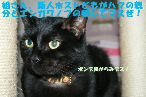038_convert_20110228232141.jpg