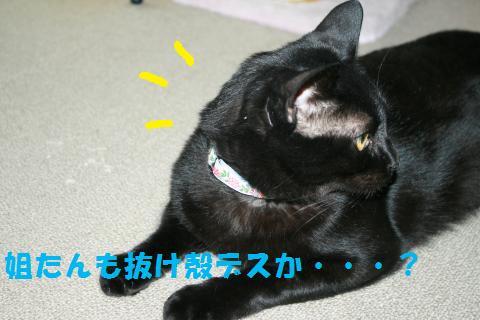 039_convert_20100713002257.jpg
